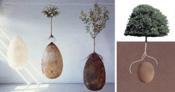 Biodegradable Burial Pod Memory Forest Capsula Mundi Fb